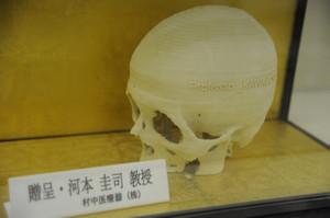 Skullmuseum001