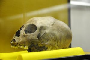 Skullmuseum002