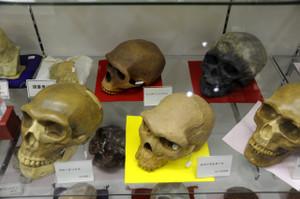 Skullmuseum006