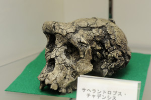 Skullmuseum014