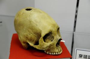 Skullmuseum017